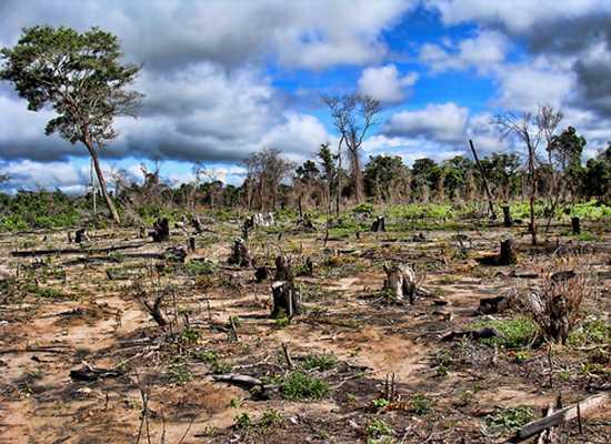 deforestado